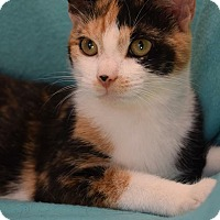 Adopt A Pet :: MASKIE - Washington, NC