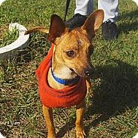 Adopt A Pet :: Oliver - Jacksonville, FL