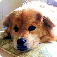 Adopt A Pet :: Abby (in KY) - Vansant, VA