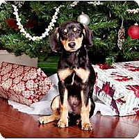 Adopt A Pet :: Flash - Owensboro, KY