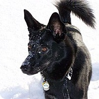 Adopt A Pet :: Uno - Hancock, MI
