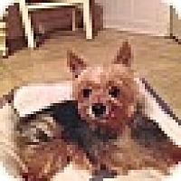 Adopt A Pet :: Louie Lou - Leesburg, FL