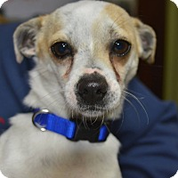 Adopt A Pet :: Oliver - Meridian, ID