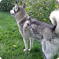 Adopt A Pet :: Hope - Augusta County, VA