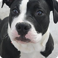 Adopt A Pet :: Winnie - Meridian, ID