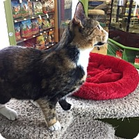 Adopt A Pet :: Tarzanna - Warrenton, MO