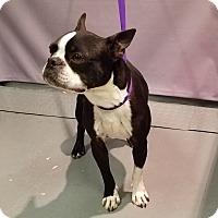 Adopt A Pet :: BARRY - Tucson, AZ