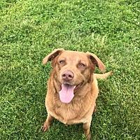 Adopt A Pet :: Ozzie - Russellville, KY