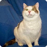 Adopt A Pet :: Jack - Colorado Springs, CO