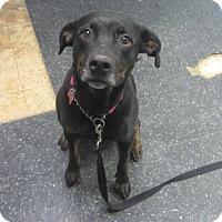 Adopt A Pet :: Opal - Menands, NY