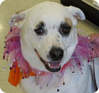 Labrador Retriever Mix Dog for adoption in Scottsdale, Arizona - Sara