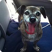 Adopt A Pet :: Rocky - Creston, CA