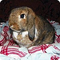 Adopt A Pet :: Hazel - North Gower, ON