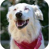 Adopt A Pet :: Nike - Mesa, AZ