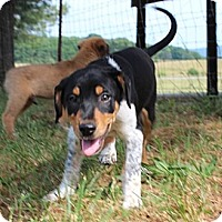 Adopt A Pet :: Outlaw - Allentown, PA