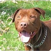 Adopt A Pet :: Rocco - Chicago, IL