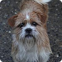 Adopt A Pet :: Graham - Yuba City, CA
