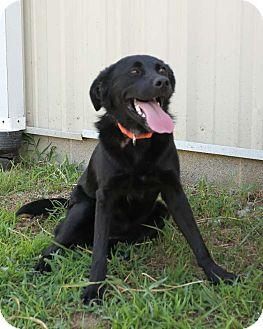 Border Collie Mix Dog for adoption in Hartselle, Alabama - Clock