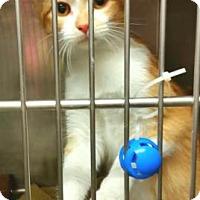 Adopt A Pet :: Casey - Valley Falls, KS