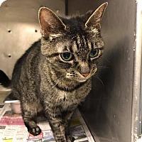Adopt A Pet :: Jill - Evansville, IN
