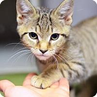 Adopt A Pet :: Vienna Katerina - Philadelphia, PA