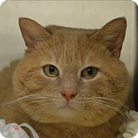 Adopt A Pet :: Wooster - Sherwood, OR