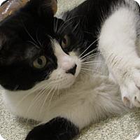 Adopt A Pet :: Nikki - Windsor, VA