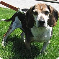 Adopt A Pet :: Whitten - New Kensington, PA