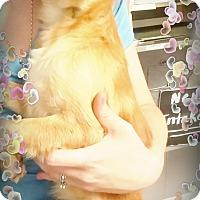 Adopt A Pet :: Fern - Odessa, TX