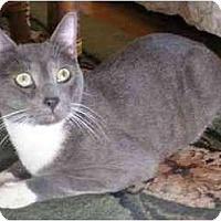 Adopt A Pet :: Prince - Portland, OR