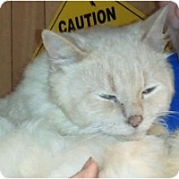 Adopt A Pet :: Grant - Anchorage, AK