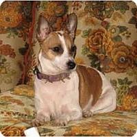 Adopt A Pet :: Minnie - Alliance, OH