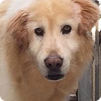Adopt A Pet :: Murphy - Foster, RI
