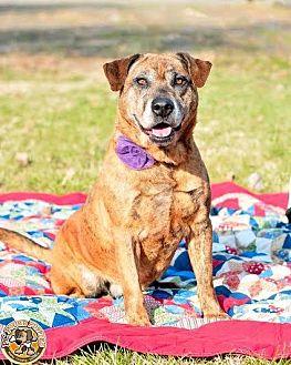 Terrier (Unknown Type, Medium)/Terrier (Unknown Type, Medium) Mix Dog for adoption in Mt. Vernon, Indiana - Dani
