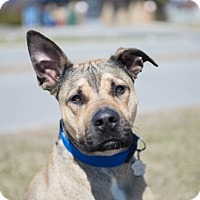 Adopt A Pet :: Méo - Rigaud, QC