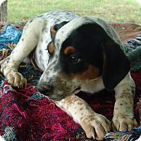 Adopt A Pet :: Jake - Plainfield, CT