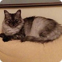 Adopt A Pet :: Peppy - Sunderland, ON