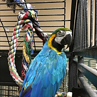 Adopt A Pet :: Sweetheart - Punta Gorda, FL