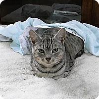 Adopt A Pet :: Momma - Somerset, KY