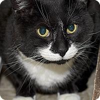 Adopt A Pet :: Maksim - Medina, OH