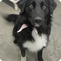 Adopt A Pet :: Jake - Holton, KS