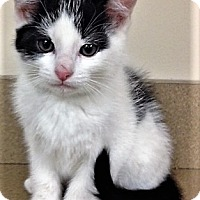 Adopt A Pet :: ADOPTED!!!   PJ - Oswego, IL
