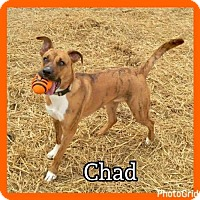 Adopt A Pet :: Chad - Jasper, IN