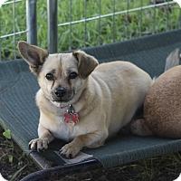 Adopt A Pet :: Carter - Kempner, TX
