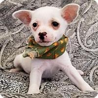 Adopt A Pet :: Littlefoot - Apple Valley, CA