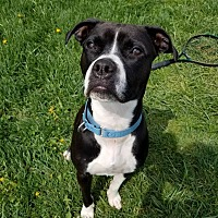 Adopt A Pet :: Lola - Seville, OH