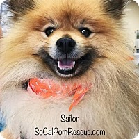 Adopt A Pet :: Sailor - Irvine, CA