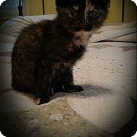 Adopt A Pet :: Paprika - Winchester, VA