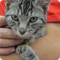 Adopt A Pet :: Joffie - Riverhead, NY