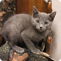 Adopt A Pet :: Ivan - Sacramento, CA